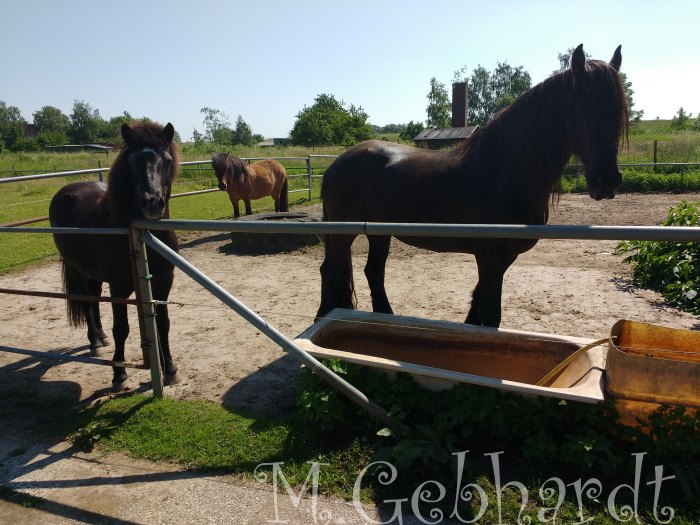 Gladur und Kor am Zaun