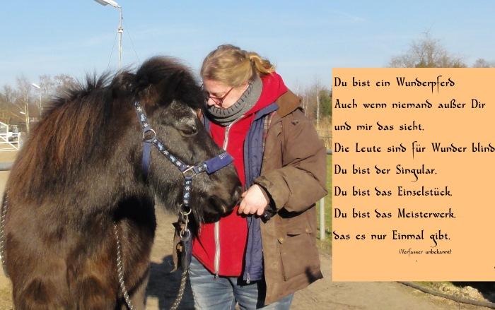 Wunderpferd Text auf einem Portrait von Gladur und mir