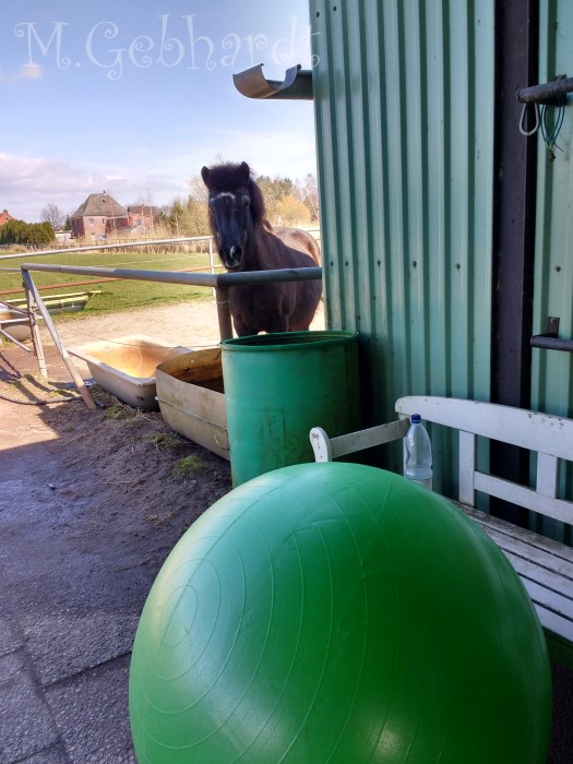 Gladur hat den Ball entdeckt und schaut gespannt um die Ecke