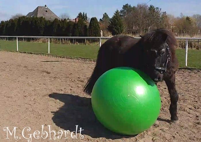 Gladur spielt mit dem Riesenball