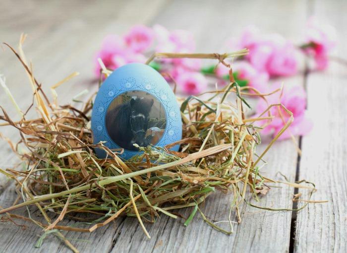 Osternest mit einem blauen Ei auf dem ein Bild von Gladur ist