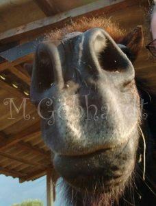 Gladur streckt seine Nase in die Kamera