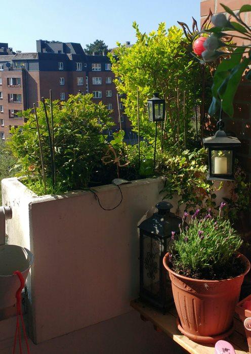 Balkonpflanzkübel