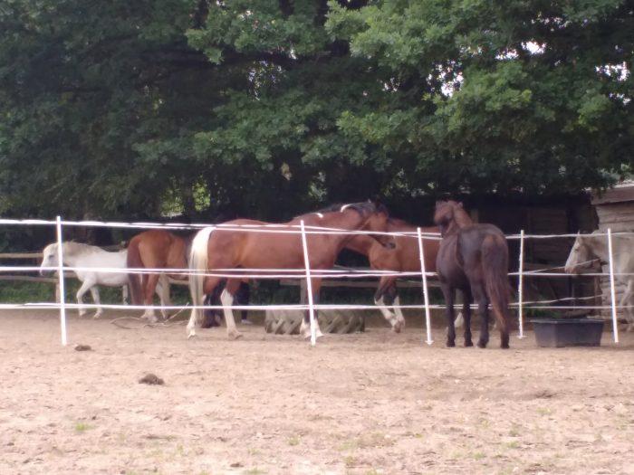 Neue und alte Bekannte am Zaun