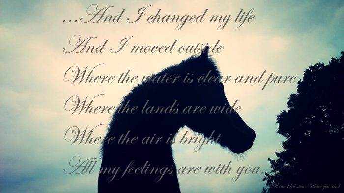Bild mit Songtext