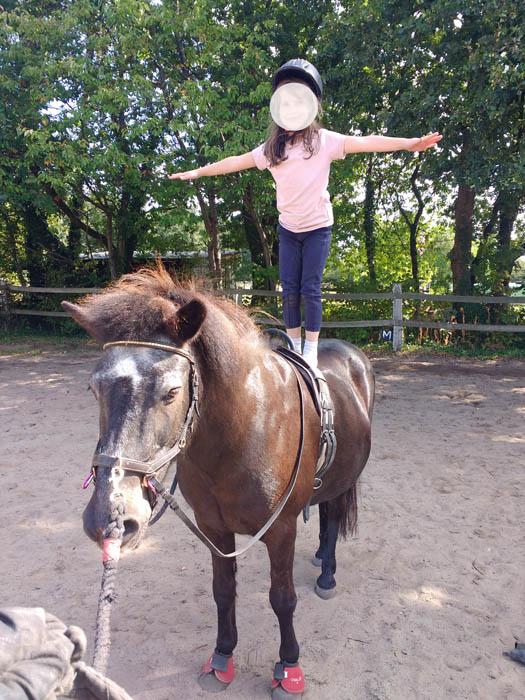 Gladur als Volti-Pony