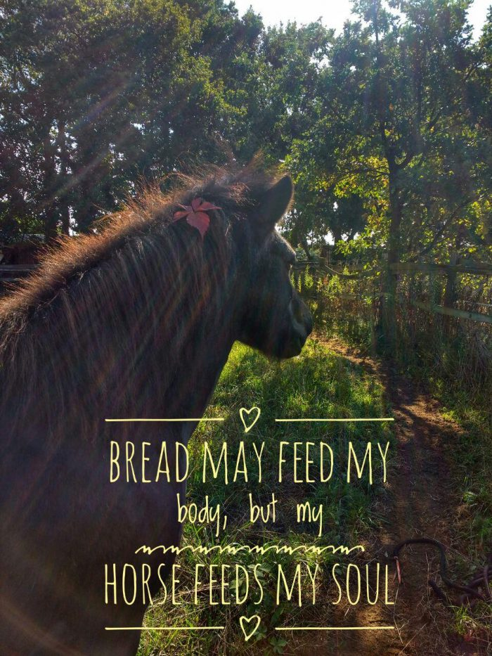 Bread my feed ny body, but my horse feeds my soul,.