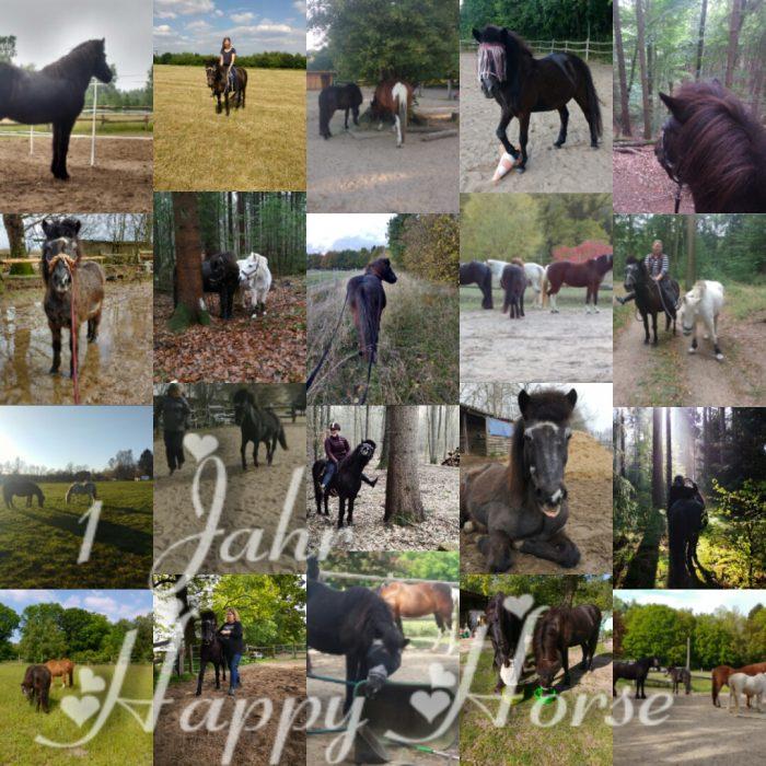 Collage aus den Bildern des letzten Jahres