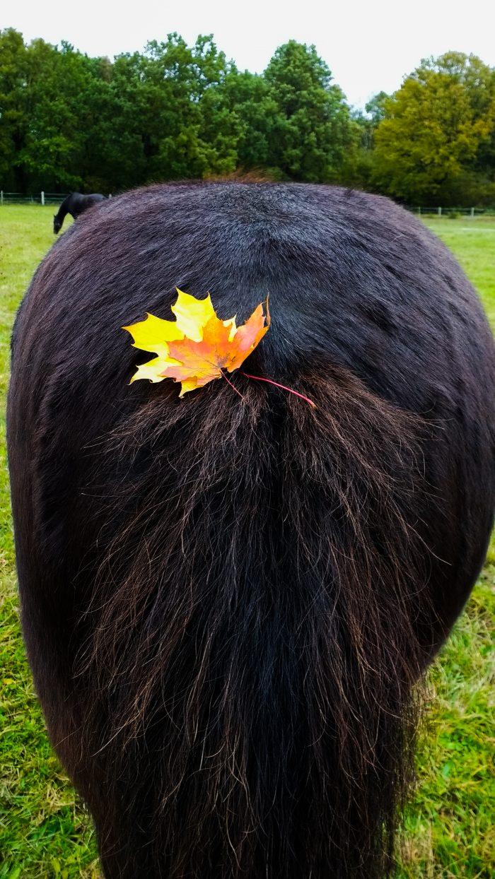 Bunte Blätter in Gladurs Schweif