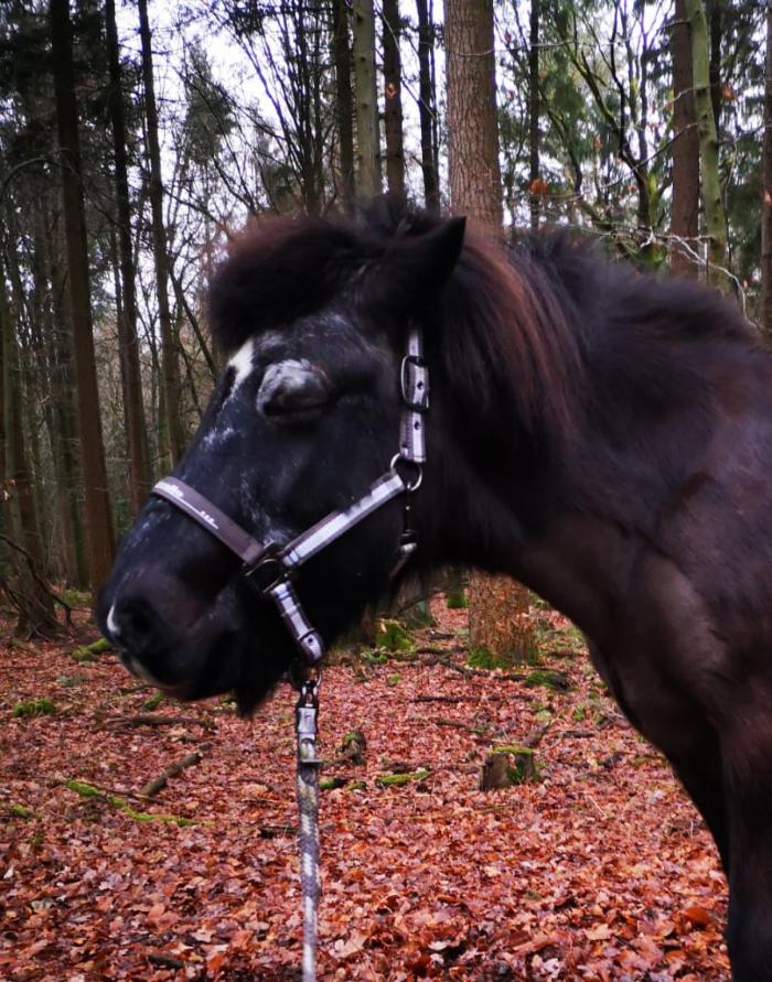 Gladur steht entspannt mit geschlossenen Augen im Wald