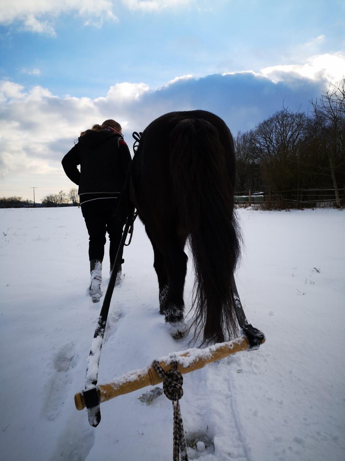 Blick vom Schlitten aufs Pferd